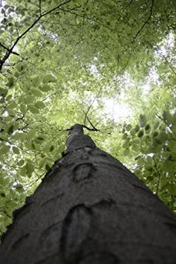 Tree Canopy In Forest