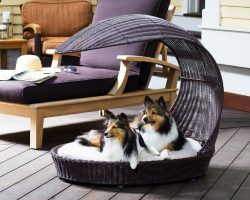 Outdoor Dog Chaise Bed n Espresso, Large