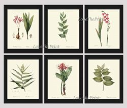 Botanical Set of 6 Prints Antique Redoute Beautiful Pink Red Flowers Gladiolus Bulb Leaf Green G ...